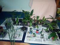 Selection of indoor houseplants (2 doz +)