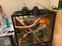 Komodo terrarium