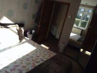 Big nice double room to rent debden