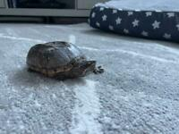 Turtle and tank