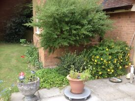 Gardener Required for Private house /part-time, flexible hours, near Ipswich £8 p.h