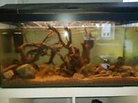 2 fish tanks with 9 fishes