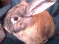 Friendly female rabbit: 6 months old