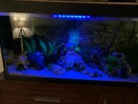 Fish tank (full set up)