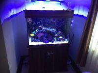 400 liter Reef aquarium