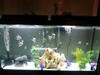 Beautiful 60 gal complete package!!! Next to new...