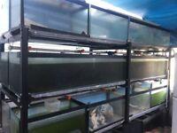 Aquarium set of 20/ Fish tank for breeding Sale for £1,320