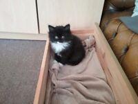 Fluffy Kittens Part Manie Coon