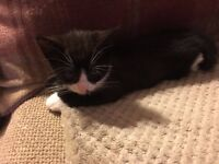 Black and White Kittens - Urgently in need of new homes