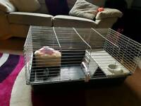 rabbit's cage