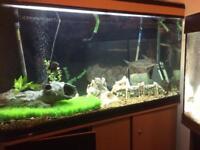 Large fish tank!