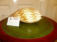 Sea shells, different prices