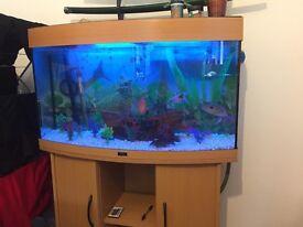 Aquarium Juwe 180 litres