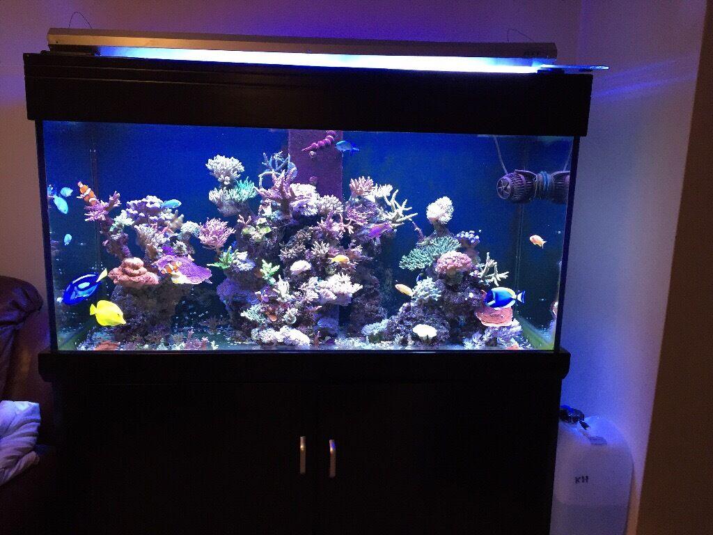 Aqua one aqua reef 400 tank sump cabinet complete reef for Aquarium marin complet