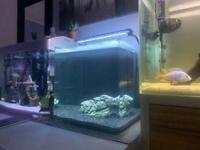 Aqua One Aspire 55L Aquarium