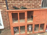 2 little rabbits and hutch