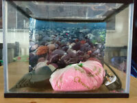Aquarium Fish Tank 20 litres with filter. Good Condition. Fish Tank.