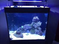 TMC V2 iLumenAir Aquarium LED lights