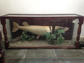 Antique cased fish
