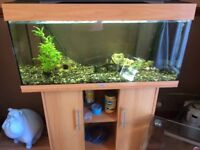 Jewel tropical fish tank with South Americans