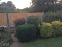 🌲Gardenology and Fencing Services🌲