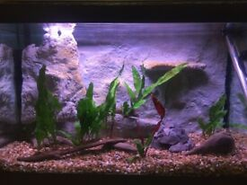 Stunning 70 L fish tank with custom made 3D background, full set up