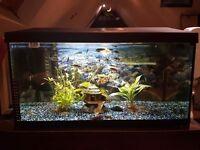 leddy 60 fish tank pretty much brand new !