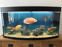 Juwel 260 vision fish tank with everything included