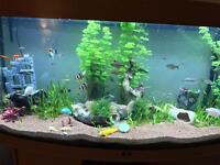 Juwel 260 aquarium