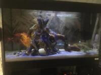 Fluval 125ltr fish tank