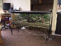 4ft fish tank with stand,hood and light