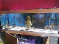 6x2x2 fish tank with sump no stand.