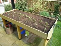 A SECONDHAND VEG TRUG ON VERY GOOD CONDITION
