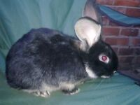 LOVELY FRIENDLY MALE RABBIT ABOUT 4 MONTHS OLD