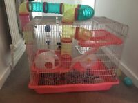 5 month old female hamster with cage