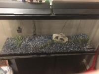 55 Gallon Fish Tank with Accesories