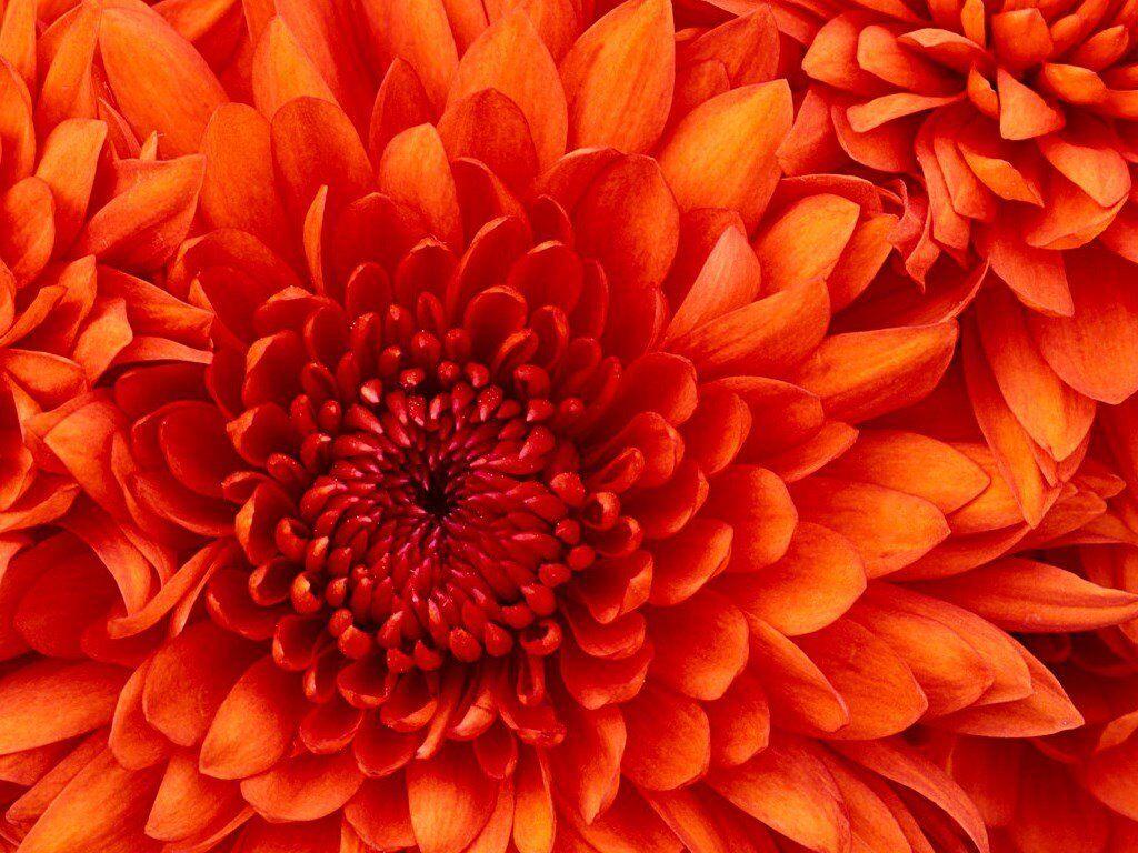Sister Flower Massage Shop In Woking 3mins From Woking