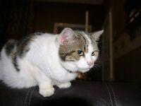 cholie the cat