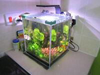 20 L Aquarium
