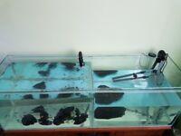 Malawi Cichlids aquarium setup