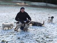 Dog Walker / Boarder Available - Friendly, Reliable for N8, N6, N4, N10, N19 Areas