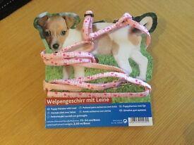 Pretty dog collar and lead