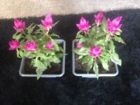 Freshly potted flowers