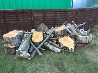 Tree wood from silver birch tree for sale. Logs, wood, firewood