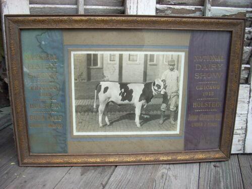 1913 Chicago NATIONAL DAIRY SHOW Holstein Bull Cow Ribbon Photo Dallas PA Winner