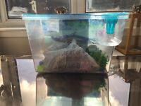 Nemo fish tank