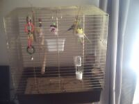 PAIR OF BUDGIES AND LARGE CAGE