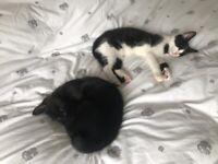 2 Delightful Kittens Ready for Their Forever Home
