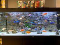 Cichlids fry fish mix