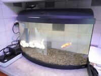 Bow fronted glass fish tank with pump and light